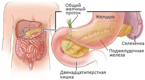 О проявлениях заболеваний поджелудочной железы